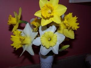 daffodils 2014 005